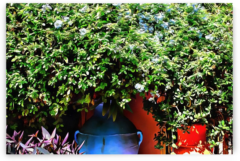 Colorful Plant Pots Marrakech 2 by Dorothy Berry-Lound