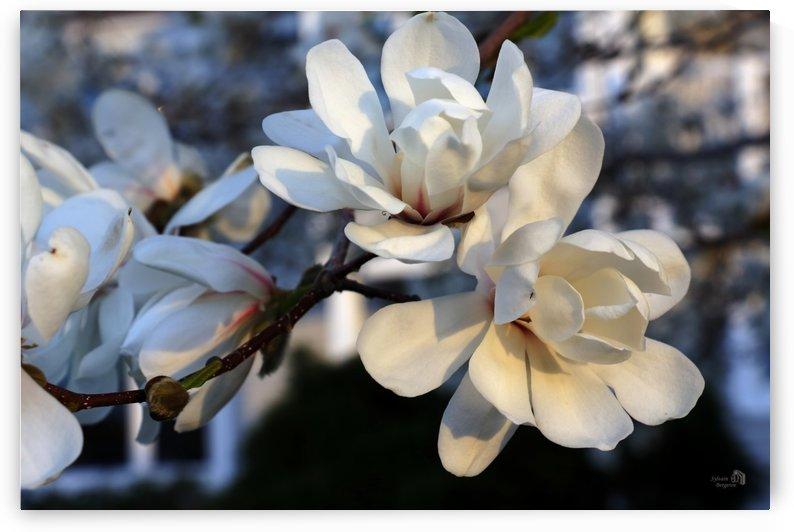 Petales-Petals by Sylvain Bergeron Photographies