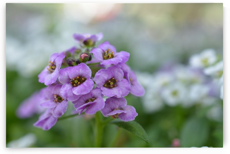 Purple Flowers Photograph by Katherine Lindsey Photography