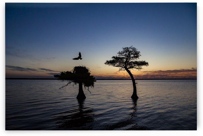Sunrise on the Nest by JADUPONT PHOTO