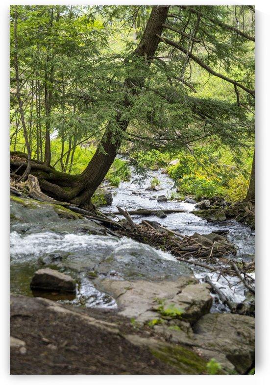 Trillium Woods 7 by Bob Corson