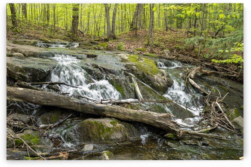 Trillium Woods 9 by Bob Corson