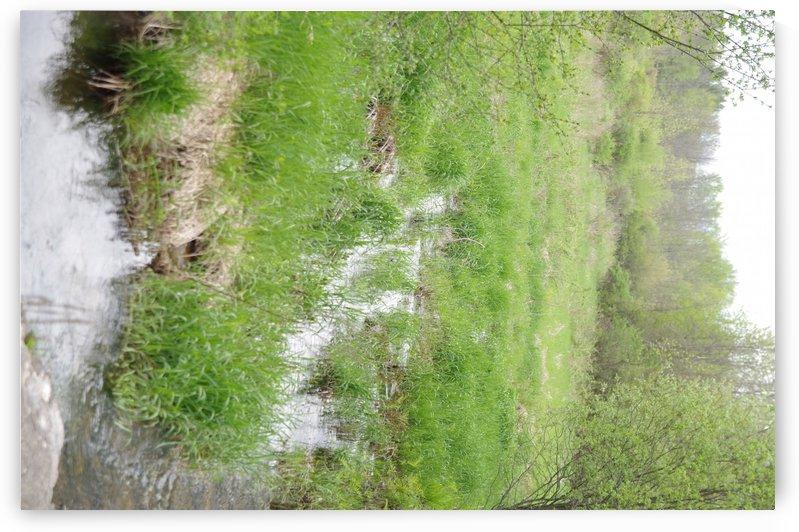 Trillium Woods 4 by Bob Corson