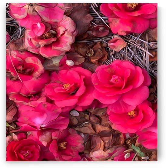 Bed Of Roses by Picturesque