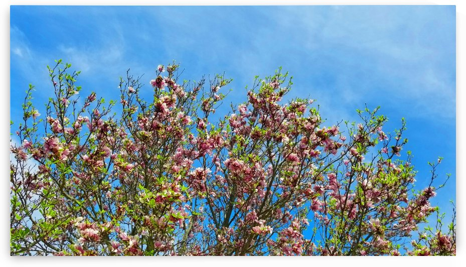 Blossom Sky  by Yuliya Marusina