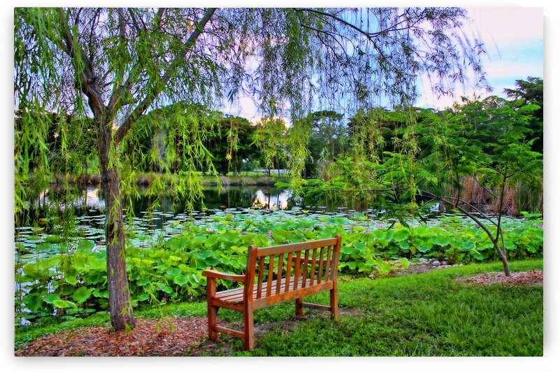 Quiet Garden by HH Photography of Florida