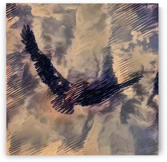 Bird of Freedom by Bruce Rolff