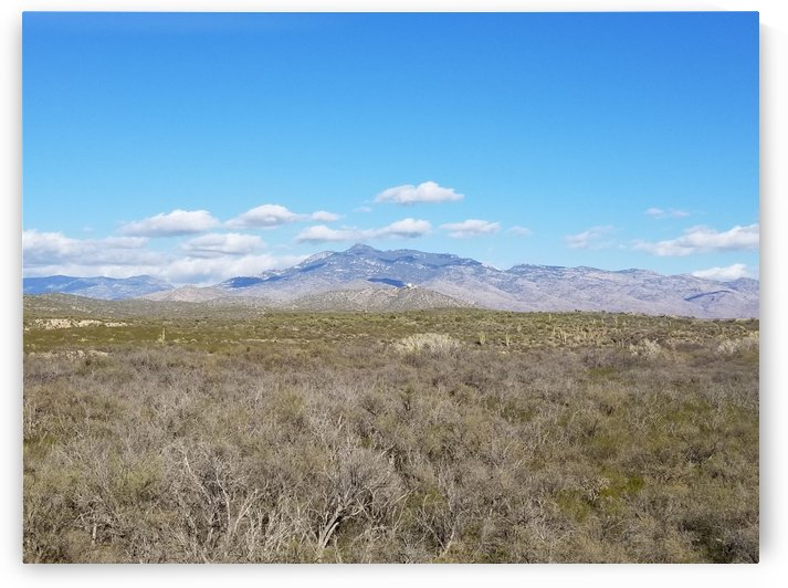 Mountain Overlooking Desert Flora by Cam