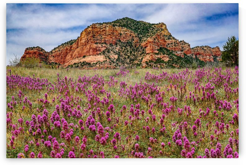 Clover Fields in Sedona by James Radford