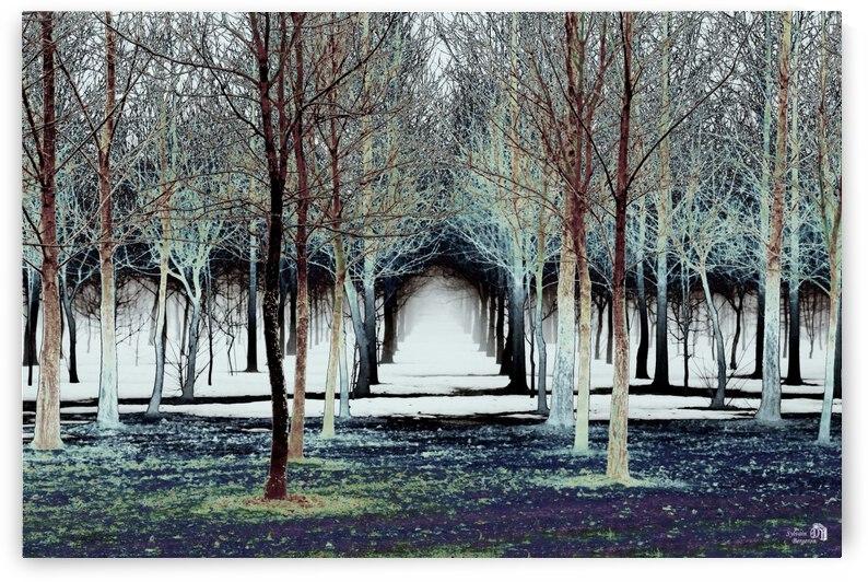 Foret Magique by Sylvain Bergeron Photographies
