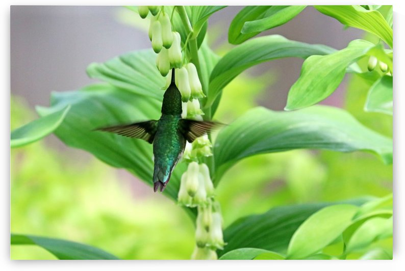 Shades Of Green by Deb Oppermann