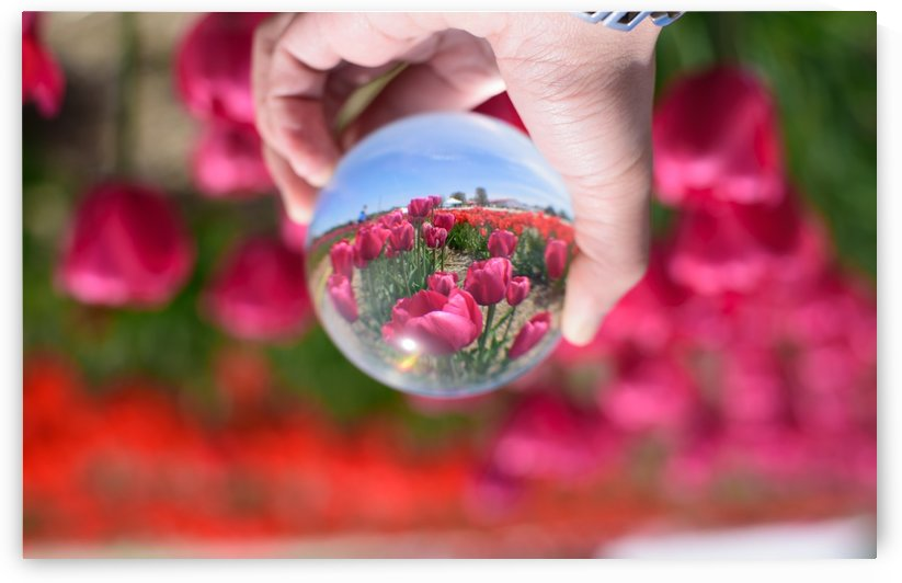 Tulips on a Crystal Ball by RezieMart