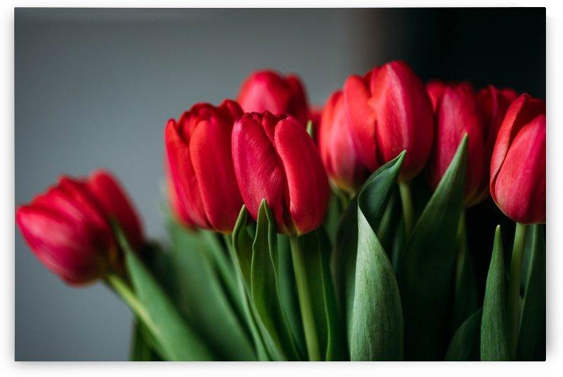 Beautiful bloom blooming  by Alex Pell