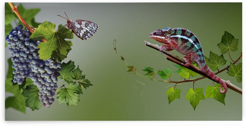 Intrigue   Butterfly and chameleon by Radiy Bohem