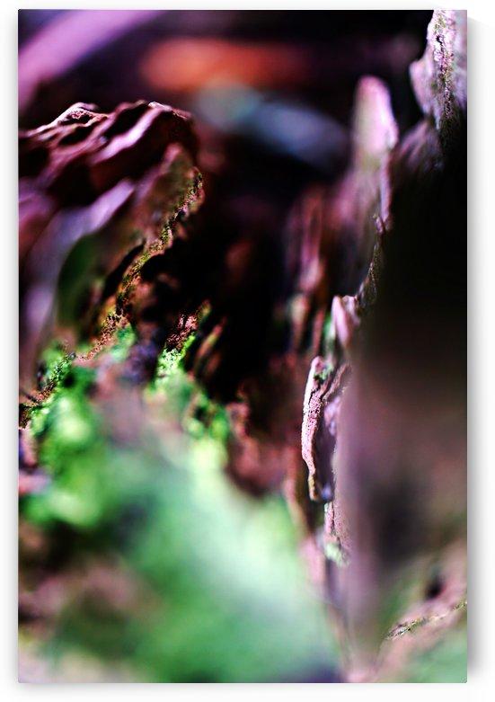 DSC03143 by Richard Vloemans Photography