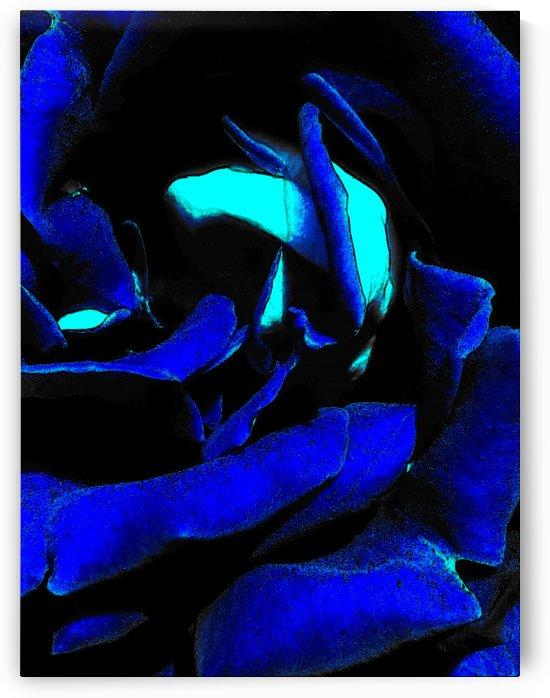 Art of the Blue Rose  1 by Jeremy Lyman