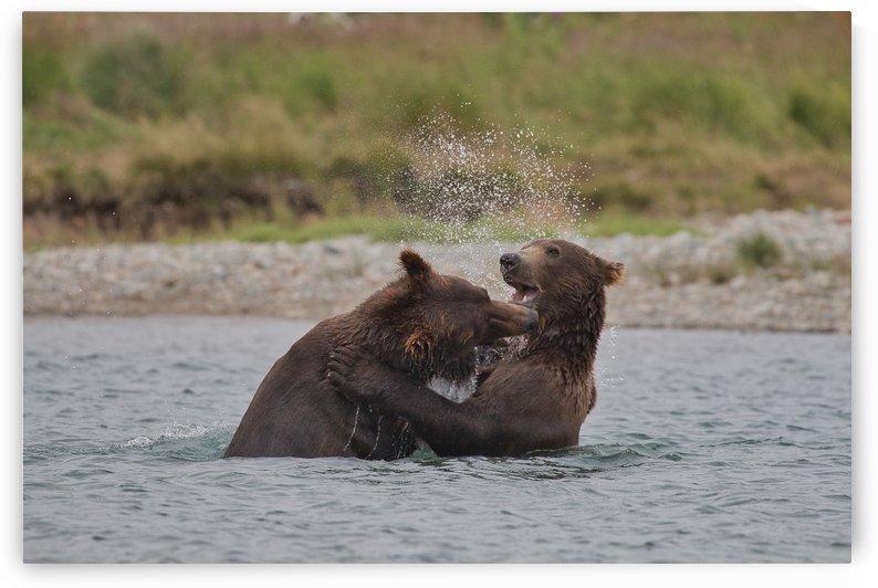 IMG_2612 by Alaska Dreaming