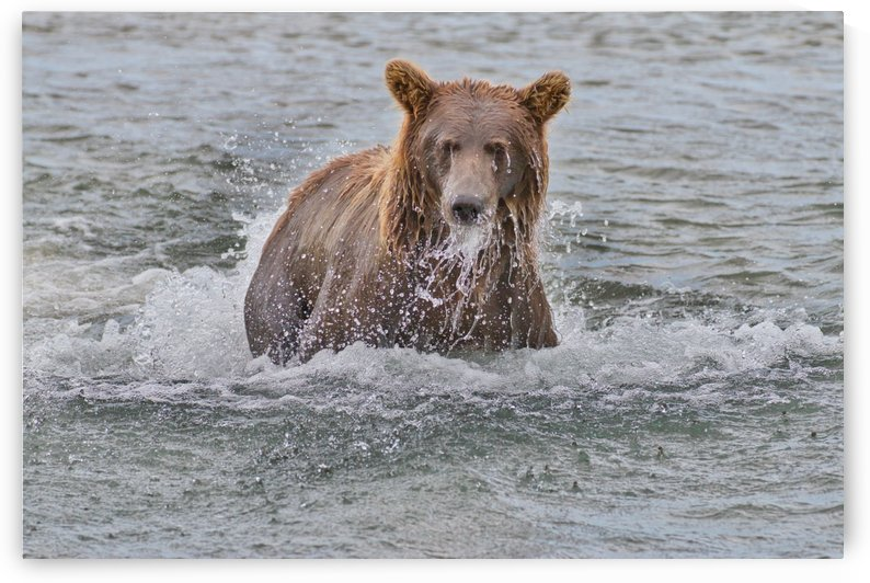 IMG_1036 by Alaska Dreaming