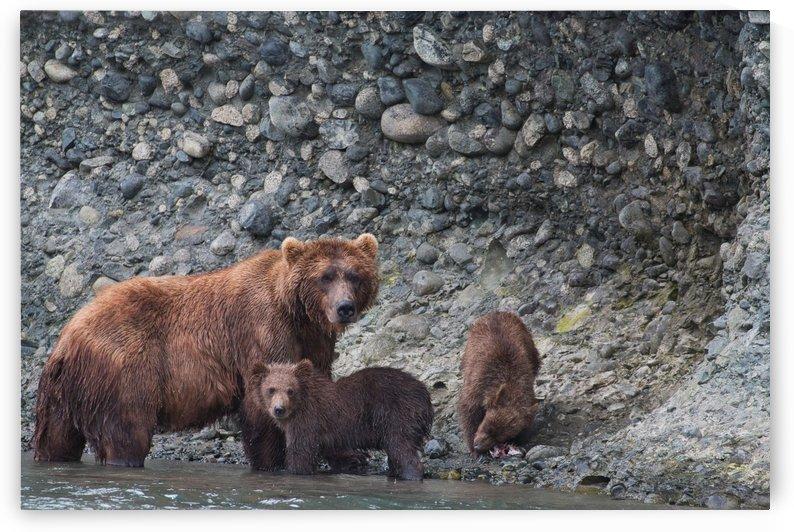 IMG_2845 by Alaska Dreaming