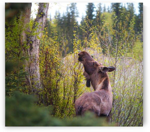 IMG_5833 by Alaska Dreaming