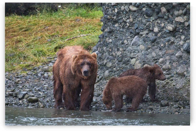 IMG_2868 by Alaska Dreaming