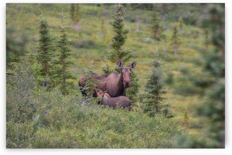 _MG_7146 by Alaska Dreaming