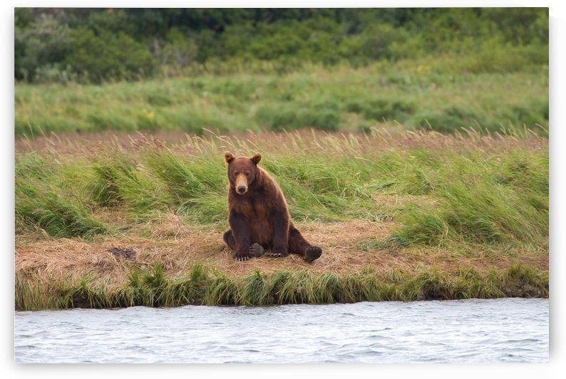 IMG_1185 by Alaska Dreaming
