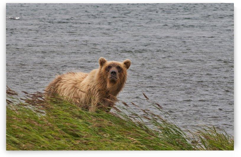 IMG_3738 by Alaska Dreaming