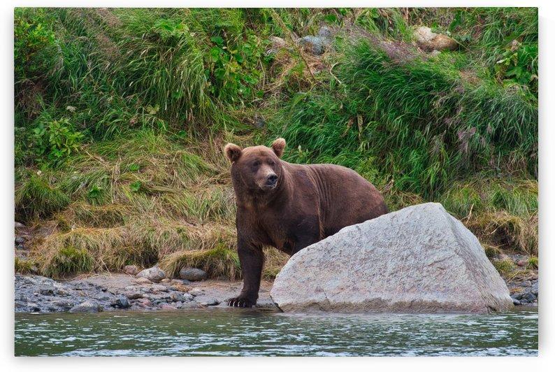 IMG_2674 by Alaska Dreaming