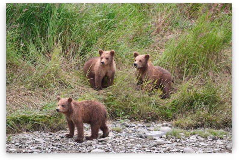 IMG_2163 by Alaska Dreaming