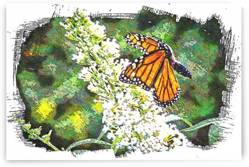Butterfly in Flight  by Gina Matarazzo
