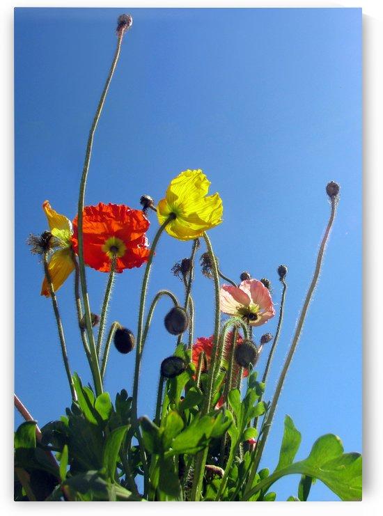 Spring Sky Garden by Jaeda DeWalt