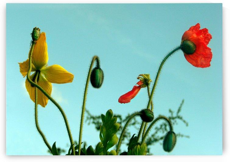 Spring Sky Flowers by Jaeda DeWalt