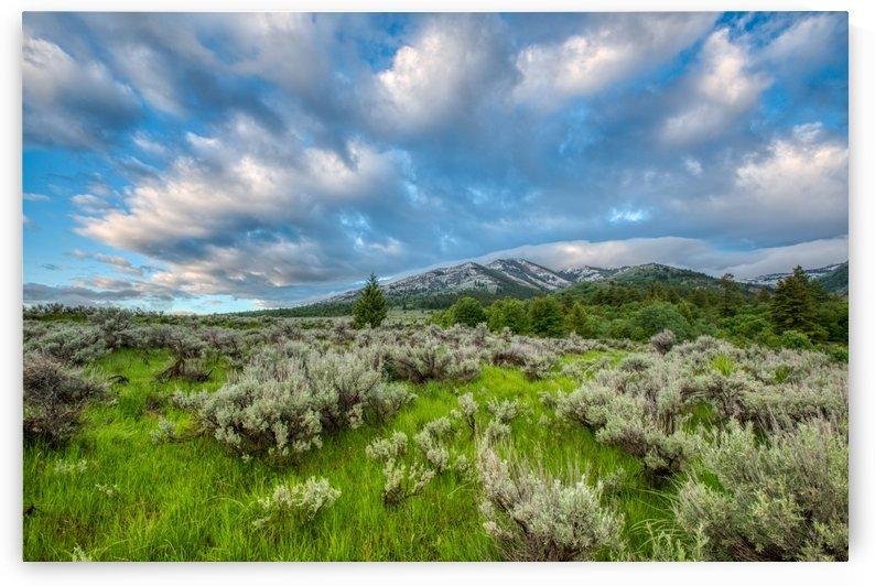 Goodenough Canyon Landscape by Brian J Riley
