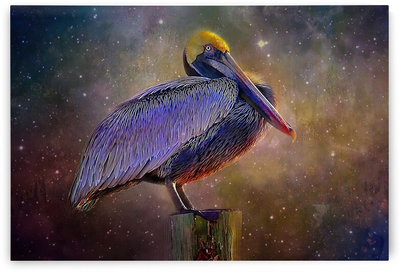 Cosmic Pelican by HH Photography of Florida