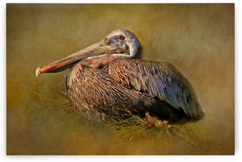Perched Pelican by HH Photography of Florida