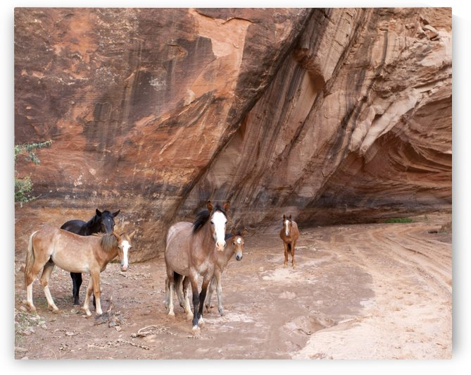Horses of Canyon De Chelly by Eliot Scher
