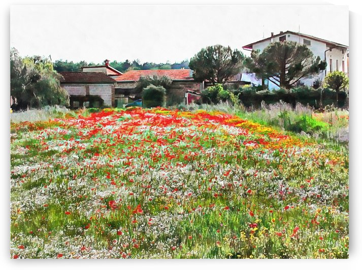 Old Farm House With Poppies by Dorothy Berry-Lound