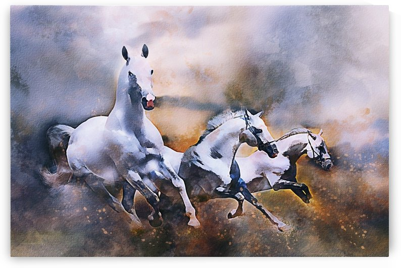 Horses mammal animal nature by Shamudy