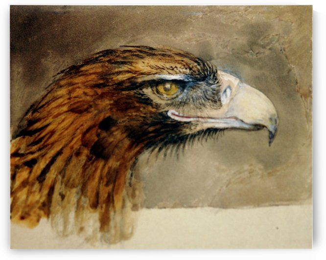Eagle's head from life by John Ruskin