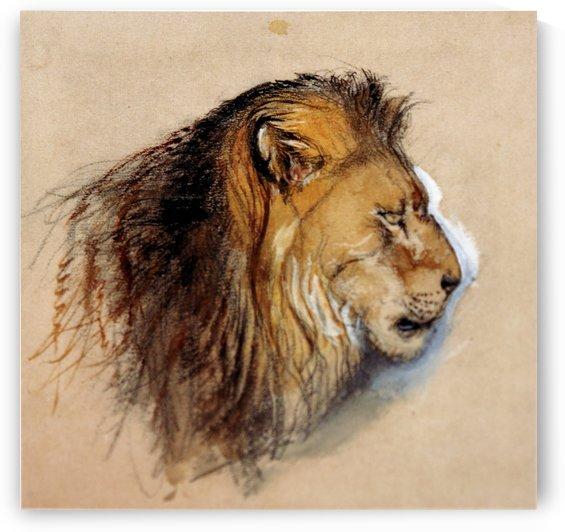 Lion's profile by John Ruskin