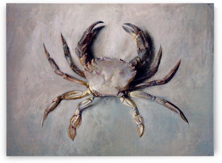 Velvet Crab by John Ruskin