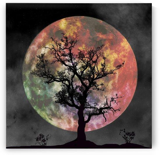 full moon silhouette tree night by Shamudy