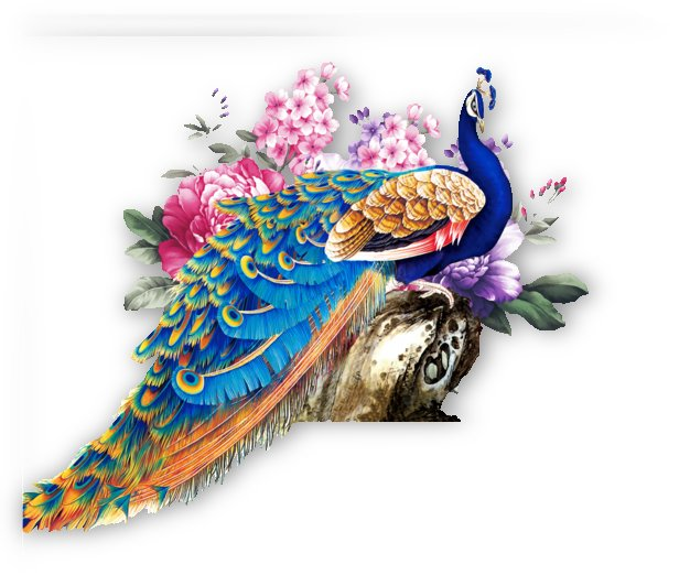 china wind peacock by Shamudy