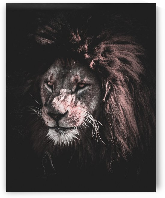 lion painting by Shamudy