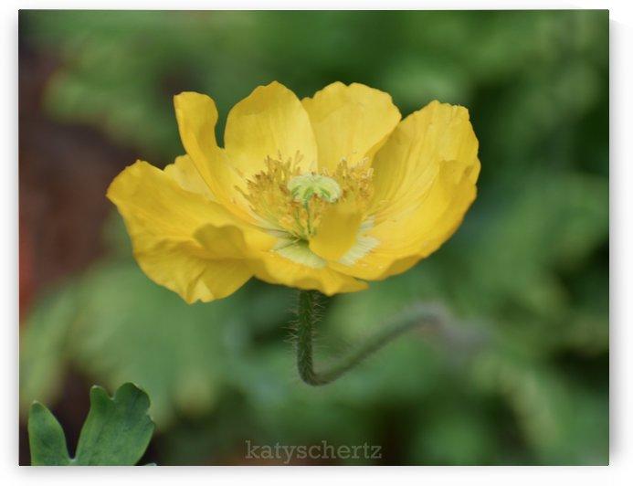 Happy Poppy by Katy Schertz