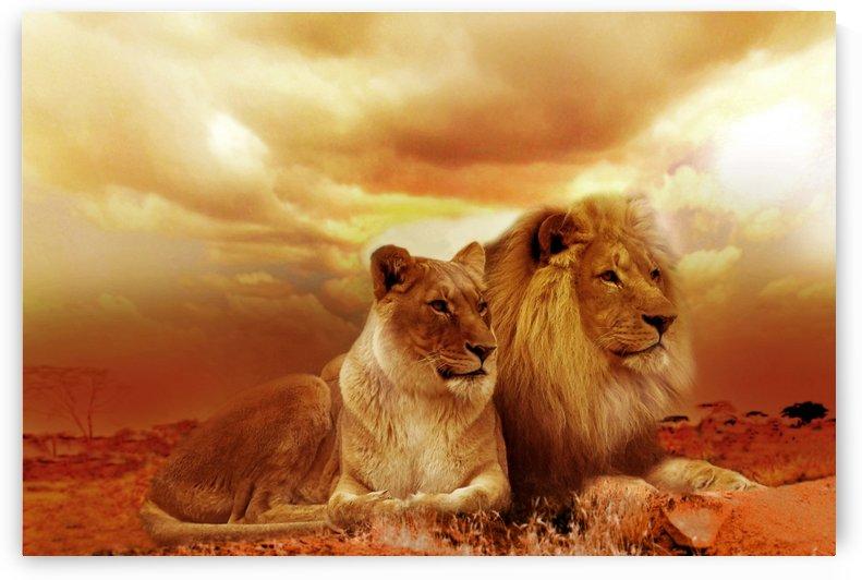 lion safari africa landscape by Shamudy