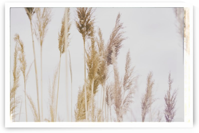 Tall Grass by Alexis Arnold