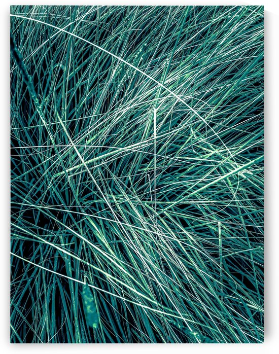 green grass texture abstract background by TimmyLA