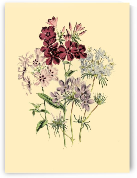 botanical print antique flora plant by Shamudy